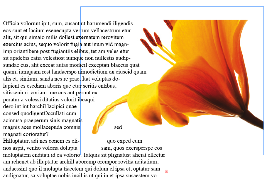 adobe indesign text wrap desktop publishing software